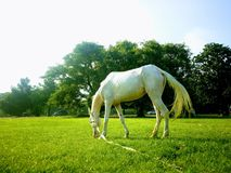 Лошадь Стоковые Фотографии RF