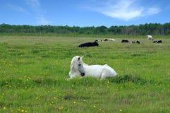 лошадь Стоковая Фотография