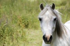 лошадь Стоковое Фото
