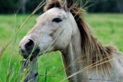 лошадь стоковое фото rf