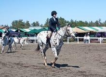 лошадь appaloosa вверх по теплому Стоковое Фото