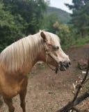 Лошадь Cheval стоковые изображения rf