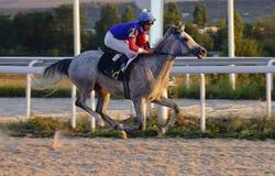 Лошадиные скачки в Pyatigorsk Стоковые Фото
