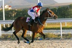 Лошадиные скачки в Pyatigorsk Стоковое Фото
