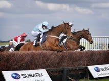 Лошадиные скачки дилетанта скача над загородками Стоковое фото RF