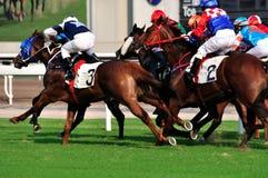 лошадиные скачки Hong Kong игры Стоковые Фотографии RF
