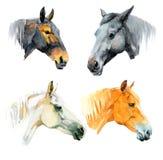 Лошади акварели Стоковые Фотографии RF