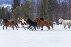 Лошади бежать в снеге стоковые изображения rf