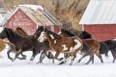 Лошади бежать в снеге стоковое фото rf