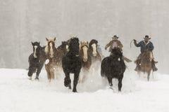 Лошади бежать в снеге стоковая фотография
