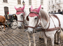 Лошади в вене Австрии Стоковые Фотографии RF