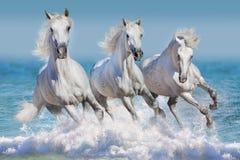 Лошади в воде стоковые фото