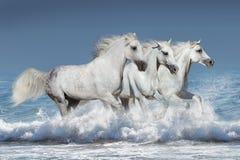Лошади в воде Стоковое фото RF