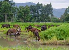 Лошади в выгоне. Стоковые Изображения