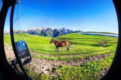 Лошади в горах стоковая фотография rf