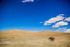 Лошади в горах Kirgiz стоковые фото