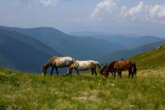Лошади в горе Стоковое Изображение
