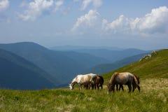 Лошади в горе Стоковая Фотография