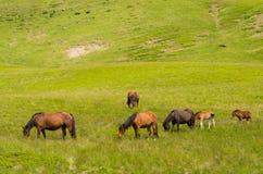 Лошади в конце-вверх выгона Стоковые Изображения