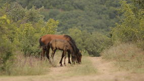Лошади в одичалом сток-видео