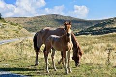 Лошади в одичалом Стоковые Фотографии RF