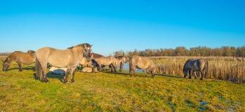 Лошади вдоль берега замороженного озера Стоковые Изображения