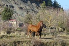 Лошади в поле от Каталонии, Испании Стоковые Фотографии RF