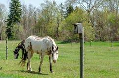 Лошади в поле Стоковое Изображение