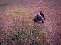 Лошади в поле Стоковое Фото