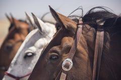 Лошади в ряд 01 Стоковое Изображение