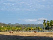 Лошади в самаре Стоковые Изображения RF