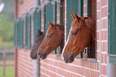 Лошади в стойле Стоковые Фотографии RF