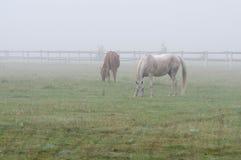 Лошади в тумане Стоковые Изображения RF