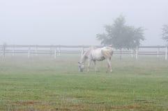 Лошади в тумане Стоковое Фото