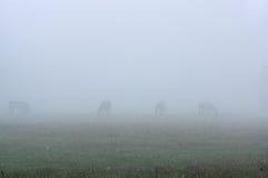 Лошади в тумане Стоковые Изображения