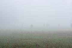 Лошади в тумане Стоковое Изображение RF