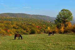 Лошади в лужке Стоковое Фото