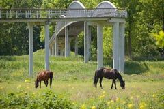 Лошади в лужке Стоковые Фото
