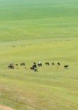 Лошади в лужке Стоковые Изображения