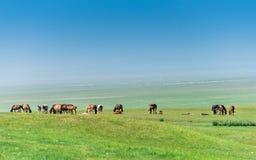 Лошади в лужке Стоковое Изображение