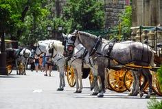 Лошади в улице в Севилье Стоковые Фотографии RF