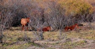 Лошади в ферме лошади Стоковое Изображение