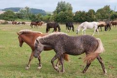Лошади в ферме Стоковая Фотография