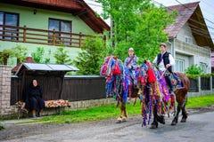 Лошади в Maramures Стоковые Изображения