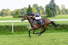 Лошади гонки на следе Partynice Стоковые Фото