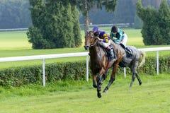 Лошади гонки на следе Partynice Стоковое Изображение RF