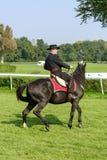 Лошади гонки на следе Partynice Стоковое Фото