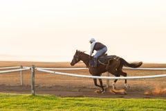 Лошади гонки тренируя рассвет Стоковые Изображения RF