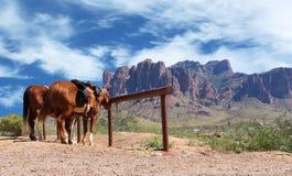 Лошади городка Диких Западов связанные к столбу стоковая фотография rf