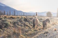 Лошади дерева в луге на заходе солнца Стоковые Фотографии RF